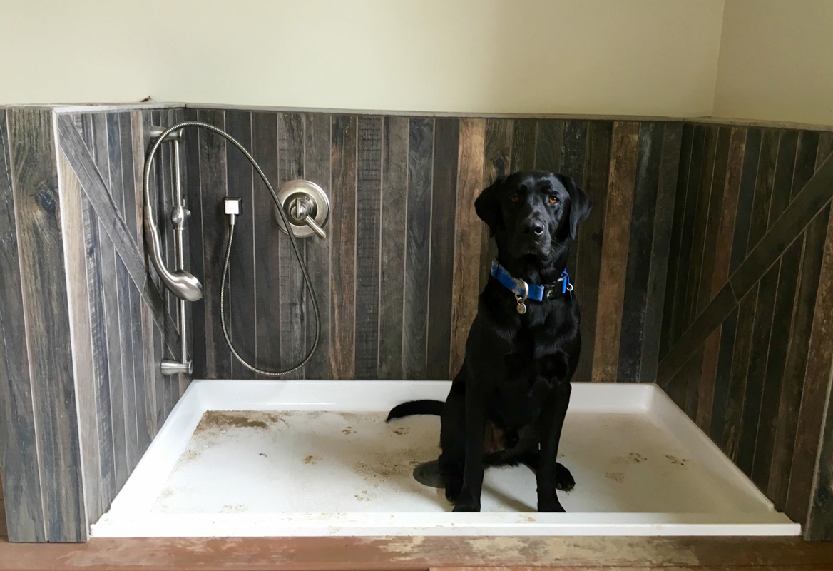 Dog Wash & Dog Door